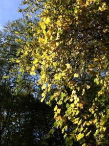Autumn in the Aude - a wild vine